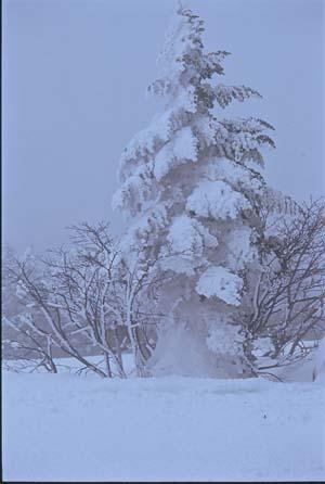 渋峠の冬.jpg